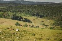 Colombia, Consejo Superior del Sistema Nacional de Innovación Agropecuaria (SNIA), se eligieron ocho de los miembros del SNIA, CONtexto ganadero, Noticias ganaderas