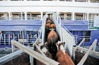Apoyo del gobierno, bloqueo económico a la ganadería, prohibir exportación de ganado, estabilidad de precios, empleo, dinamismo, clúster ganadero, esfuerzos, noticias de ganadería colombiana, CONtexto ganadero.