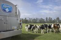 Calidad leche, calidad composicional de la leche, calidad higiénica, calidad leche Alpina, calidad leche Colombia, productores leche, ganaderos, Leche mezclada con lactosueros y grasas, leche barata, butter oil, lactosueros, leche mezclada con butteroil, leche mezclada con grasa animal o vegetal, leche barata colombia, lactosueros para bajar precio de leche, prácticas para bajar precio de leche en Colombia, CONtexto ganadero, ganaderos colombia, noticias ganaderas colombia