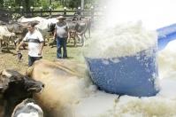 importaciones leche polvo Colombia 2020, contingente leche en polvo Estados Unidos 2020, importaciones lácteos colombia noticias, cifras importaciones lácteos colombia, importaciones leche colombia industria, Importaciones de leche en polvo, importaciones de leche en polvo colombia, importaciones de leche en polvo aranceles, importaciones de leche en polvo tlc, CONtexto ganadero, ganaderos colombia, noticias ganaderas colombia