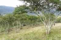 Maderable, sostenible, cambio climático, fruta, frutas, legumbres, desequilibrado,, vulnerable, ecosistemas, productividad, finca, desprotegida, lluvia, agua, suelo, propietario, propiedades, animales, forraje, árboles, dispersos, silvopastoril, erosión, aprovechar, microorganismos, CONtexto ganadero, ganaderos Colombia, noticias ganaderas Colombia