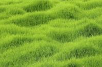 Mión, pastos, uso, ganadero, ganadería, afán, conservar, comida, forrajes, comida, insectos, tiempos, épocas, secas, lluvias, cambio climático, pastoreo, vacas, momentos, crisis, bovinos, ciclo de vida, CONtexto ganadero, ganaderos Colombia, noticias ganaderas Colombia