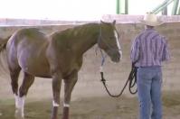 Ganadería, ganadería colombia, ganadería colombiana. Contexto ganadero, noticias ganaderas, noticias ganaderas colombia, equinos, cuidados equinos, cuidados caballos, manejo caballos, manejo equinos, manejo sanitario en equinos, alimentación en equinos, pesebreras para equinos, cascos en equinos, medidas pesebreras en equinos, problemas gástricos en equinos, estomago equinos, productores equinos, productores, ganaderos colombia, ganaderos
