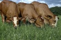 pastos en la finca, calidad del pasto, consumo del pasto, manejo del pasto, fertilización del pasto, semillas forrajeras, análisis de suelo, carga animal