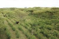 Somos semilla para una ganadería sostenible, Municipios ganaderos sostenibles, Proyecto Ganadería Colombiana Sostenible, Ganadería Sostenible, Territorios ganaderos sostenibles