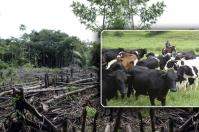 Ganadería, ganadería colombia, Ganadería colombiana, Consumo de carne, CONtexto ganadero, noticias ganaderas, deforestación, debate consumo de carne. gases efectos invernadero, Cambio climático, ganadería daña medio ambiente, ganaderos, ganaderos colombia