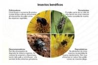 insectos benéficos en ganadería, insectos plaga en ganadería, manejo de insectos en la finca, control de insectos en la finca ganadera, noticias ganaderas de Colombia, CONtexto ganadero, Ganadería Colombiana Sostenible