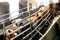 Cinco fundamentales para exportar, ordenamiento de la producción, diferenciación de producto, formalización, trazabilidad, movilización de animales, asado de tira, regiones cercanas a puertos, demanda internacional, zonas del interior, ruta exportadora, noticias de ganadería colombiana, CONtexto ganadero.
