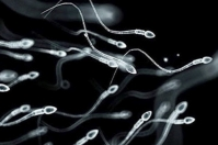 espermatozoides, animales, Genética, semen, bovino, epidimal, reproducción, muerte, sacrificio, accidente, descarte, crioconservación, ovocitos, inseminación artificial, embriones, intracitoplásmicos, biobancos, genómica, Ganadería, ganadería colombia, noticias ganaderas colombia, CONtexto ganadero.