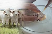 Ganadería, ganadería colombia, noticias ganaderas, noticias ganaderas colombia, CONtexto ganadero, biotecnología, biotecnología reproductiva en Colombia, embriones, para qué hacer embriones, mejoramiento genético, hacer crías, mejoramiento de productividad, reproductividad bovina, importancia de hacer embriones