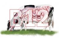 leche, vaca, vitamina B12, sistema digestivo, rumen, dieta, beneficios, salud, plantas, alimento, bacterias, microorganismos, tracto digestivo, Ovejas, cabras, estómago, Pasto, nutrición, fibra de detergente ácido, microbioma, granjas orgánicas, Ganadería, ganadería colombia, noticias ganaderas colombia, CONtexto ganadero