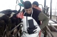 ganadería, ganadería colombia, noticias ganaderas, noticias ganaderas colombia, contexto ganadero, ultrasonografía, ultrasonografía en Colombia para qué sirve la ultrasonografía, qué evalúa la ultrasonografía, ultrasonografía en hembras