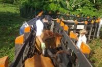 Fiebre aftosa, primer ciclo de 2021 de vacunación contra la fiebre aftosa, cobertura preliminar del 98% en vacunación contra la fiebre aftosa, Fedegán-FNG, ICA, bioseguridad, vacas, vacas Colombia, lechería, bovinos, ganadería bovina, ganadería bovina Colombia, noticias ganaderas, noticias ganaderas Colombia, contextoganadero