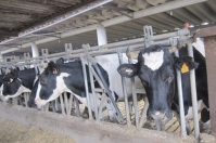 Ganadería, ganadería colombia, noticias ganaderas, noticias ganaderas colombia, CONtexto ganadero, vacunación de bovinos, vacunacion en bovinos, inmunoterapia, inmunoterapia en bovinos, diferencia entre vacunacion e inmunoterapia en bovinos