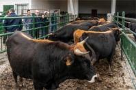 Ganadería, ganadería colombia, noticias ganaderas, noticias ganaderas colombia, CONtexto ganadero, ganadería españa, ganaderos españa, Programa Nacional de Conservación, Mejora y Fomento de razas ganaderas, agrodigital, protección ganado en europa