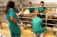 España, Castilla-La Mancha, tuberculosis, Ganaderos en España cuestionan los protocolos contra la tuberculosis, CONtexto ganadero, noticias ganaderas, bovinos