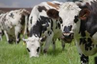aftosa, investigación, AMBIENTE, vacas, enfermedades, animales contagiados, patógeno, zona contaminada, nuevas estrategias, desinfección, Ganadería, ganadería colombia, noticias ganaderas colombia, CONtexto ganadero