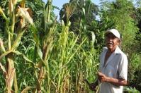 Ganadería, ganadería colombia, noticias ganaderas, noticias ganaderas colombia, CONtexto ganadero, agroecología, agroecología suelo, suelo, cuidado del suelo
