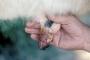 Vacuna contra estomatitis vesicular, venta de vacuna estomatitis vesicular, vacuna estomatitis vesicular Colombia, Estomatitis vesicular, costos asociados a la estomatitis vesicular, pérdidas que ocasiona la estomatitis vesicular, Fiebre aftosa, Colombia estomatitis vesicular, Vecol, Vacunas Vecol, Ganadería, Ganadería colombiana, noticias ganaderas, noticias ganaderas colombia, CONtexto ganadero