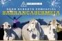 Sugaberrio, subasta comercial en Barrancabermeja, comercialización de ganado en en Barrancabermeja, ganaderos de Barrancabermeja, cámara de comercio de Barrancabermeja