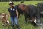 líder gremial, mujeres ganadera, presidente de comité de ganaderos de Mocoa, presidente de Cogamo, primera presidenta de Cogamo, ganadería, ganadería colombia, noticias ganaderas, noticias ganaderas colombia, contexto ganadero,