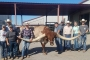 Ganadería, ganadería Colombia, Ganadería colombiana, CONtexto ganadero, Bucklehead, cuernos más grandes, Guinness Récord, estados unidos, toro grandes, ganaderos, ganaderos Colombia, Texas