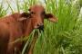 ganadería, ganadería colombia, noticias ganaderas, noticias ganaderas colombia, contexto ganadero, gases efecto invernadero, ganaderia, ganadería sostenible, gei, captura de carbono,