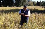 Con esta aplicación es posible, en el medio del lote, introducir unos pocos datos básicos sobre los cultivos y estimar los costos e ingresos específicos del campo.
