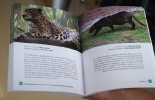 """Colombia, fauna silvestre, silvicultura, Grupo Argos y la U. CES se unen para identificar fauna silvestre en proyectos de silvicultura, """"Guía de identificación de fauna silvestre asociada a proyectos de silvicultura, especies de vertebrados terrestres en aves, anfibios, mamíferos y reptiles de los ecosistemas aledaños a los municipios de Puerto Libertador (Córdoba) y San Onofre (Sucre), rana lechera, el cernícalo, el murciélago pescador, el ratón mochilero, la azotadora, Ganadería, ganadería colombiana, not"""