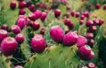 FAO, cultivos tradicionales, hambre cero, consumir cultivos tradicionales,Ganadería, ganadería colombiana, noticias ganaderas, noticias ganaderas Colombia, CONtexto ganadero