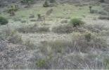 conservación de pastizales, cobertura de suelos, métodos para medir la cobertura de los suelos, prácticas para mejorar la cobertura de los suelos, INIFAP -México, CONtexto ganadero, noticias ganaderas, vacas