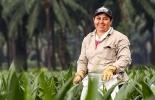 Fedepalma, Convocatoria al Premio Mujer Palmera Campesina 2019, reconocimiento a la mujer palmera, contexto ganadero, noticias ganaderas, agricultura