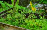 Forestería comunitaria, FAO Colombia, modelo de Manejo Forestal sostenible a través de la Forestería Comunitaria, proyecto piloto de forestería comunitarias, CONtexto ganadero, noticias ganaderas colombianas, forestería
