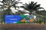 caribia, Agrosavia, investigación de Agrosavia, fortalecimiento del sector hortícola, sector hortícola del caribe