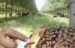 ganaderia, ganaderia colombia, ganaderia colombiana, contexto ganadero, noticias ganaderas, noticias ganaderas colombia, apicultura, apicola, abejas, polen, silvoapicolas, cultivo multiestrato, ganaderos, ganaderos colombia