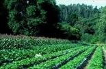 Principios ecológicos, sustentabilidad, agroecosistemas, reciclado de biomasa, flujo balanceado de nutrientes, plantas, materia orgánica, actividad biótica del suelo, radiación solar, aire y agua, agroecosistema, guía buenas prácticas para gestión y uso sostenible del suelo en áreas rurales de la FAO, uso del suelo agrícola en Colombia, Ministerio de Ambiente, FAO, Organización de las Naciones Unidas para la Alimentación y la Agricultura, CONtexto ganadero, ganaderos colombia, noticias ganaderas colombia