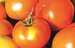 Basf, Vinquo® DC, insecticidas, insecticidas Colombia, Fríjol y tomate, tomate y fríjol 2020, insecticidas menos dañinos, insecticidas amigables con medio ambiente, ayudas para agricultores, fríjol, tomate, coronavirus, coronavirus Colombia, COVID-19, cuarentena, Ganadería, ganadería colombia, noticias ganaderas, noticias ganaderas colombia, CONtexto ganadero