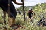ganadería, ganadería colombia, noticias ganaderas, noticias ganaderas colombia, contexto ganadero, sistemas agroecológicos, sistemas agrecológicos combatirán el covid, covid-19, cómo combatir el covid-19, agencia de noticias un,
