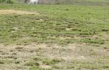 Praderas, pastos, degradación praderas, plagas, insectos, ataque de plagas, pastoreo, sistema de pastoreo, planta, fertilizantes, fertilizar, herbicida, suelo, terreno, compactación suelo, Agua, fertilización, malezas, forraje, escogencia forraje, causa degradación praderas, ganaderos, ganaderos colombia, ganado, bovinos, ganado bovino, Ganadería, ganadería colombia, noticias ganaderas, noticias ganaderas colombia, CONtexto ganadero, contextoganadero