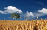 Ganadería, ganadería colombia, noticias ganaderas, noticias ganaderas colombia, CONtexto ganadero, cereales, proceso de cereales, duración cereales, cuidado cereales, tratamiento de cereales, agencia sinc