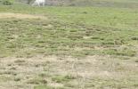 fertilización, labranza, fertilización pradera degradada, labranza pradera degradada, Praderas, pastos, degradación praderas, plagas, ataque de plagas, pastoreo, sistema de pastoreo, planta, fertilizantes, fertilizar, herbicida, suelo, terreno, compactación suelo, Agua, malezas, forraje, causa degradación praderas, ganaderos, ganaderos colombia, ganado, bovinos, ganado bovino, Ganadería, ganadería colombia, noticias ganaderas, noticias ganaderas colombia, CONtexto ganadero, contextoganadero