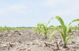 maíz, sorgo, registro, agricultores, comercializadores, Huila, Tolima, plagas, enfermedades, semilla certificada, ICA, inocuidad, sanidad, productividad, riesgos fitosanitarios, producción agropecuaria, Ganadería, ganadería colombia, noticias ganaderas colombia, CONtexto ganadero