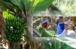 Colombiano ganador Agrostart 2020, Sigatoka Negra, aplicaciones digitales agricultura, Ganador Agrostart 2020, Basf agrostart, Basf agrostart Colombia, agrostart 2020, agrostart 2020 Colombia, Plataforma AgroStart, Convocatoria AgroStart, Tecnología sector agropecuario, Startups sector agropecuario, startups sector agrícola, AgroStart Colombia, ganaderos, ganaderos colombia, ganado, vacas, vacas Colombia, bovinos, ganado bovino, Ganadería, ganadería colombia, noticias ganaderas, noticias ganaderas colombia,