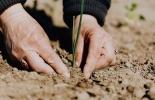 Ganadería, ganadería colombia, noticias ganaderas, noticias ganaderas colombia, CONtexto ganadero, Nutrientes, huerto, bioestimulantes, producción agrícola sostenible, productos ecológicos, bioestimulante, microorganismos, sustancias orgánicas,