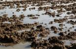 Ganadería, ganadería colombia, noticias ganaderas, noticias ganaderas colombia, CONtexto ganadero suelo, daños al suelo, que erosiona el suelo, como se erosiona el suelo, como recuperar el suelo erosionado, alternativas para el suelo erosionado,