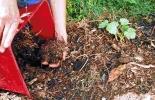 Aumente la calidad de su cultivo con abono orgánico.