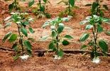 Agricultura mundial.
