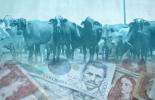 Créditos para el sector agropecuario