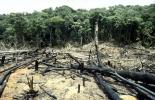 Reino Unido dona USD$24'000.000 para detener la deforestación en Colombia. Foto: Archivo.