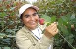 El sector rural generó más de 150.000 empleos en el último año. / Foto: Cortesía de Asocolflores